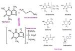 Xantinas: aminofilina.